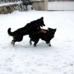 Fee_et_Grouchenka_neige_2012-02-05-tn