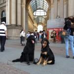 Harley Sun et Grouchenka Sun des Leus Altiers à Milan, 2015 9