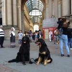 Harley Sun et Grouchenka Sun des Leus Altiers à Milan, 2015 8