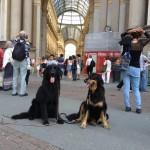 Harley Sun et Grouchenka Sun des Leus Altiers à Milan, 2015 7