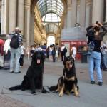 Harley Sun et Grouchenka Sun des Leus Altiers à Milan, 2015 6