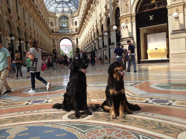 Harley Sun et Grouchenka Sun des Leus Altiers à Milan, 2015 4