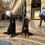 Harley Sun et Grouchenka Sun des Leus Altiers à Milan, 2015 3