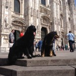 Harley Sun et Grouchenka Sun des Leus Altiers à Milan, 2015 2