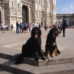 Harley Sun et Grouchenka Sun des Leus Altiers à Milan, 2015 1