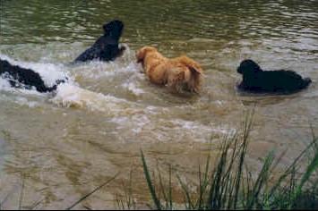 Les Hovawarts sont des grands nageurs.