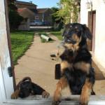 Ishtar et Jess 2014-09-04