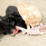 J4 des Leus Altiers carcasses 2014-10-07 6-tn