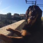 Jaeger Sun des Leus Altiers 2014-11-19 1-tn