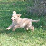 Jasper des Leus Altiers 2014-11-01 15-tn