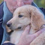 Jasper des Leus Altiers 2014-11-10 5-tn