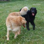 Jethro et Jiannah des Leus Altiers 2015-04-19 11-tn