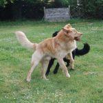 Jethro et Jiannah des Leus Altiers 2015-04-19 7-tn