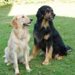Athos du Clos Chalandré et Ivane des Leus Altiers 2014-10-17 3-tn