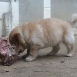FG_carcasse_2013-12-05-tn