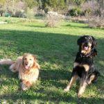 Ibane des Leus Altiers 2015-04-08 Assis jardin avec Vix_edited-tn