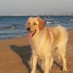 Ibiza de la Mornière 1 an