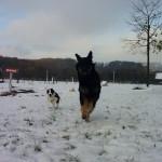 Ichigo_des_Leus_Altiers_neige2_2013-11-21-tn