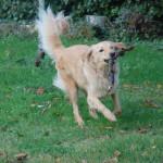 I'm Happy des Leus Altiers 2014-11-19 11-tn