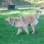 I'm Happy des Leus Altiers 2014-11-19 5-tn