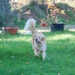 I'm Happy des Leus Altiers 2014-11-19 6-tn