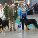 Imonoi Lagon Bleu des Leus Altiers 2014-11-15 Kortrijk 5
