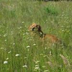 Ipad Sun des Leus Altiers 2014-05-18 2