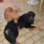 Ipad_Sun_et_Umac_des_Leus_Altiers_2013-10-08_2-tn