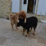 Ipad_Sun_et_Umac_des_Leus_Altiers_2013-10-31_2-tn