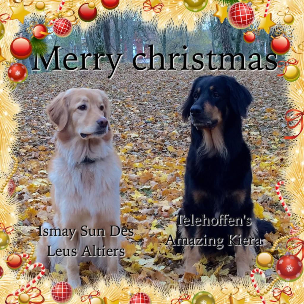 Ismay dit Izzy des Leus Altiers Christmas 2015