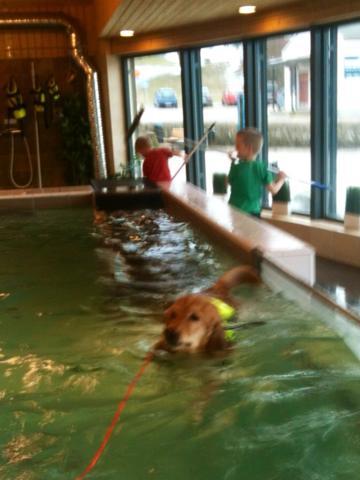 Izzi, Strömsholm 20150322 Izzi swimtraining 2015-03-22