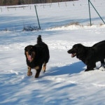 Fee_et_Grouchenka_course_neige_2012-02-06-tn