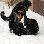 Fee_et_Grouchenka_neige2__2012-02-05-tn