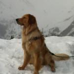 Halleys_Comet_Sun_assis_neige-tn