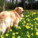 Halleys_Comet_Sun_fleurs-tn