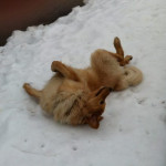 Halleys_Comet_Sun_roule_neige-tn