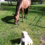 Happy_3_mois_et_cheval-tn