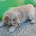 Happy_coechee_2012-03-14-tn