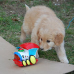 Heasy_2012-03-27-tn