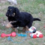 Herby_2_2012-03-27-tn