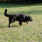 Hermine Sun des Leus Altiers 2015-08-24 4-tn