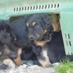 Hermine_et_EG_cache_cache_2012-03-13-tn