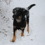 Hiro_5.5_mois_neige-tn