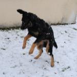 Hiro_5.5_mois_neige_2-tn