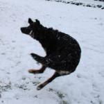 Hiro_5.5_mois_neige_3-tn