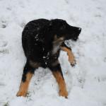 Hiro_5.5_mois_neige_5-tn