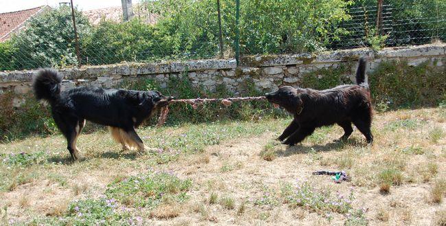 Ichigo et Jais des Leus Altiers 2015-07, 2-tn