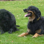 Igor et Sunia 1