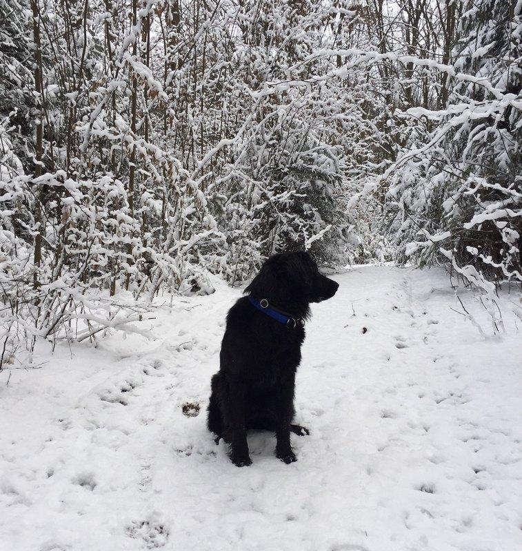jais-des-leus-altiers-neige-1_tn