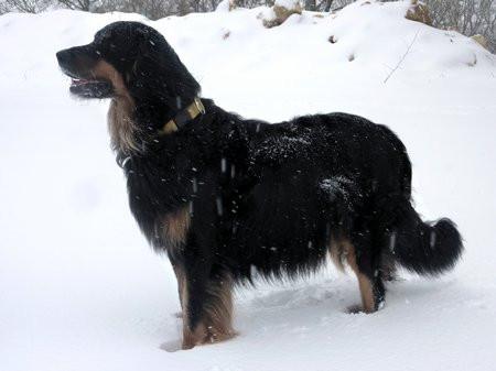 Sunia_neige_2012-02-05-tn
